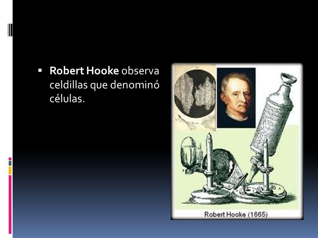 Robert Hooke observa celdillas que denominó células.