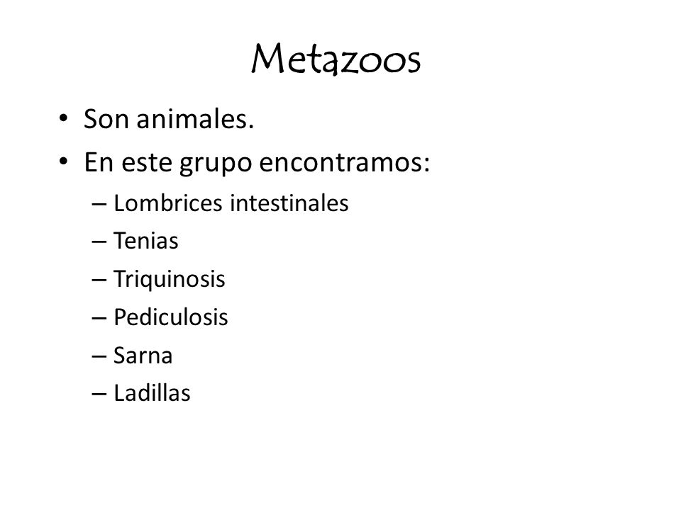 Metazoos Son animales. En este grupo encontramos: