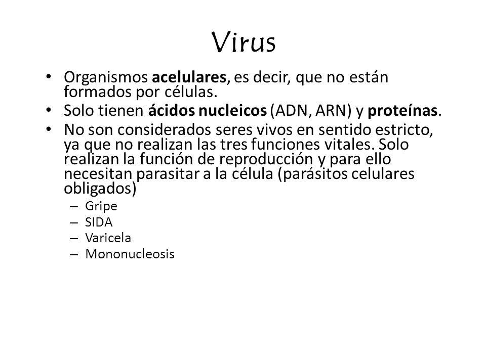 Virus Organismos acelulares, es decir, que no están formados por células. Solo tienen ácidos nucleicos (ADN, ARN) y proteínas.