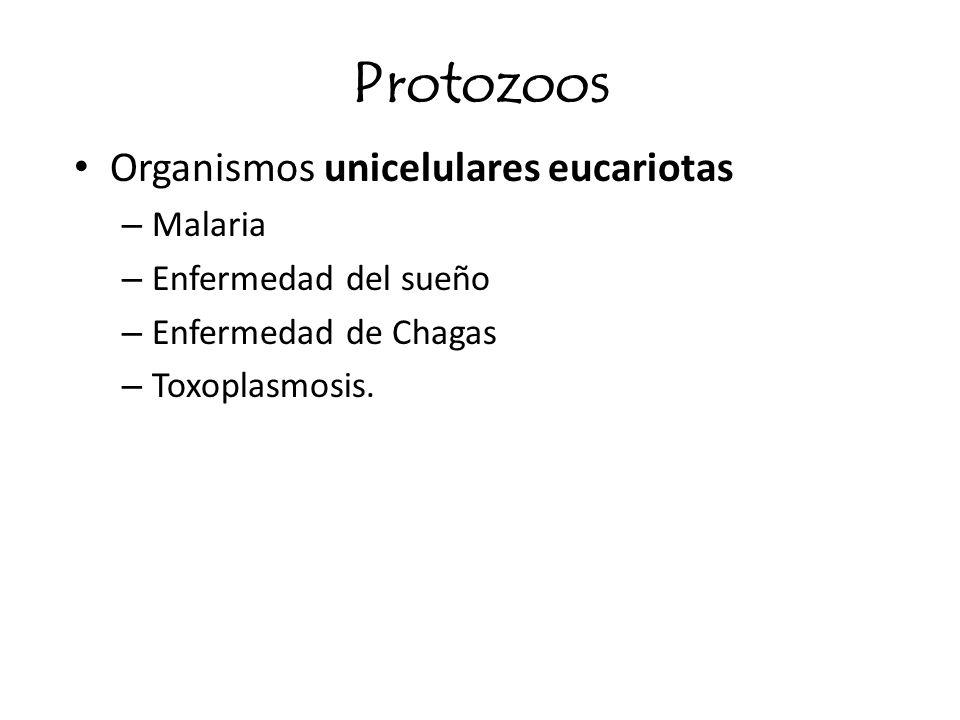 Protozoos Organismos unicelulares eucariotas Malaria