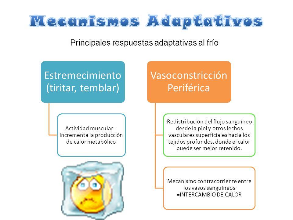 Mecanismos Adaptativos
