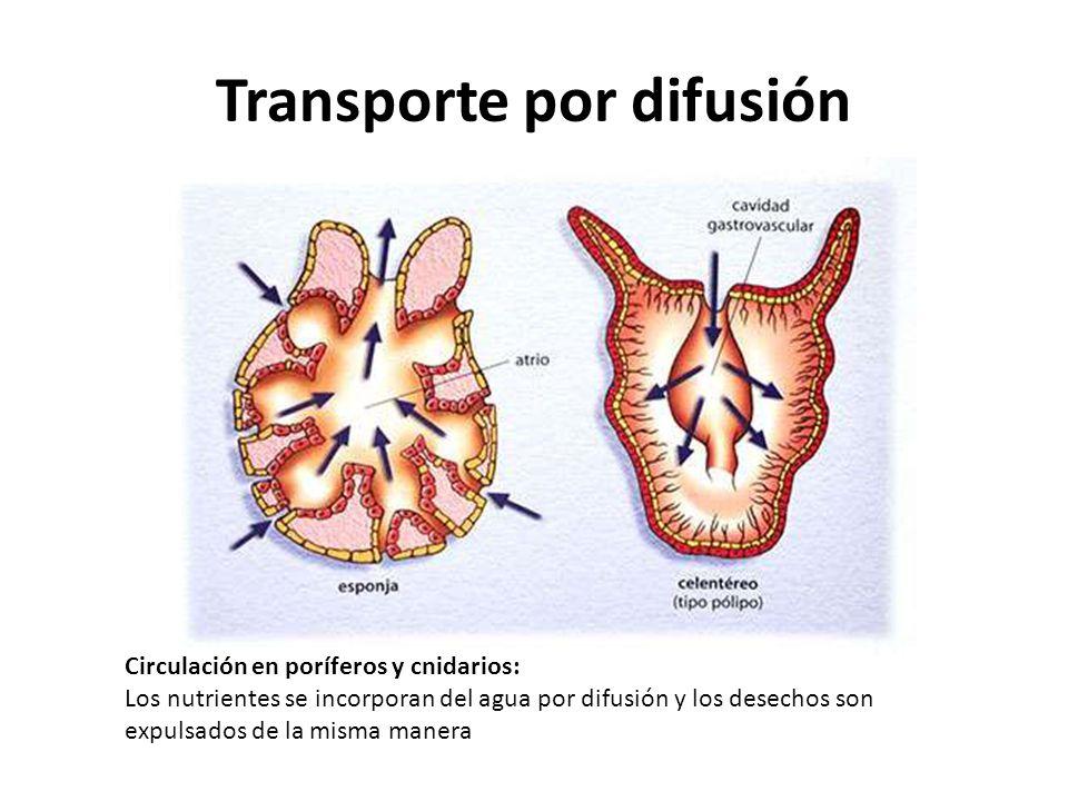 Transporte por difusión