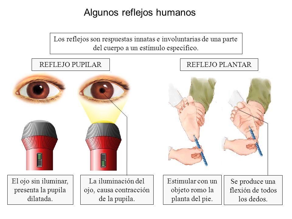 Algunos reflejos humanos