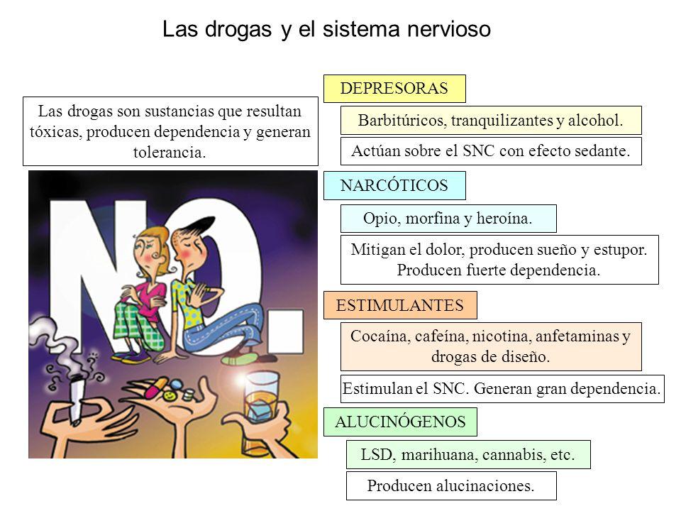 Las drogas y el sistema nervioso