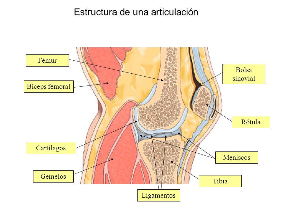 Estructura de una articulación