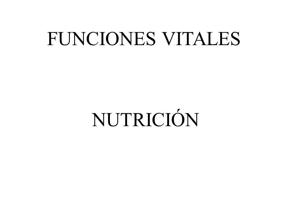 FUNCIONES VITALES NUTRICIÓN