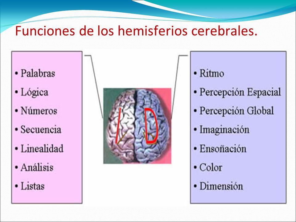 Funciones de los hemisferios cerebrales.