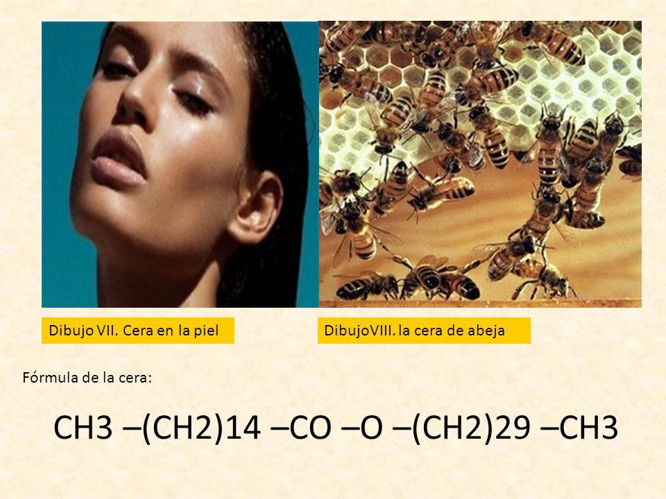 CH3 –(CH2)14 –CO –O –(CH2)29 –CH3