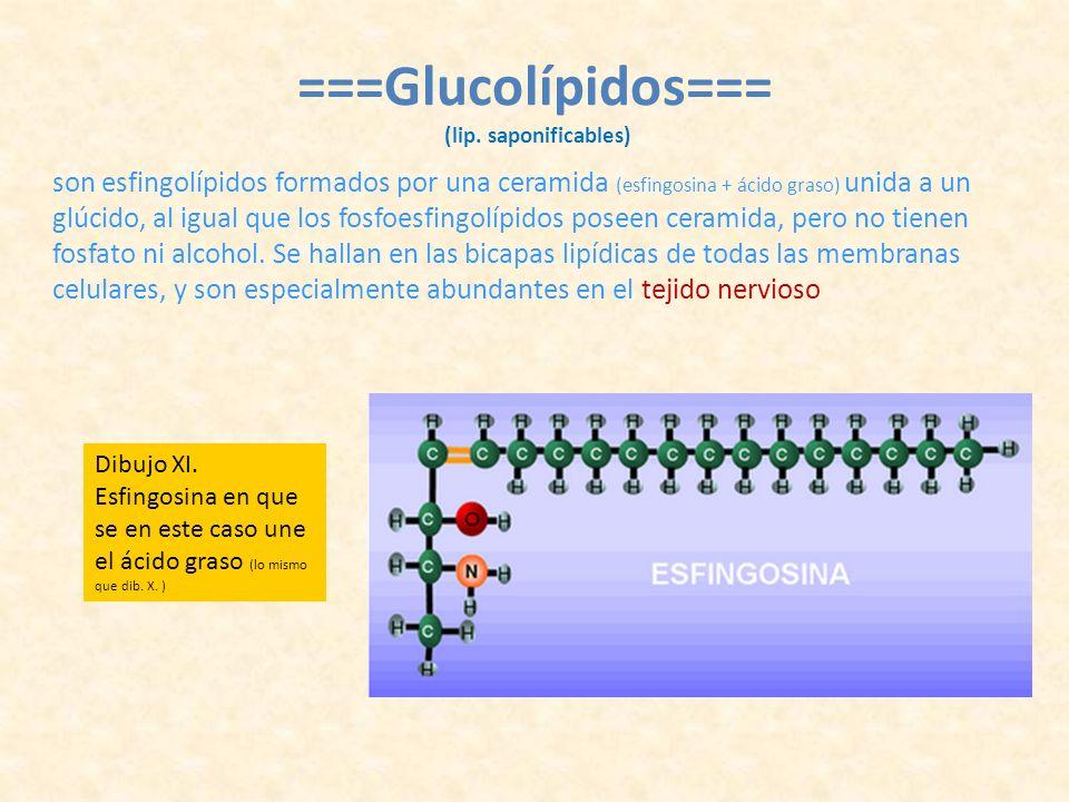 ===Glucolípidos=== (lip. saponificables)