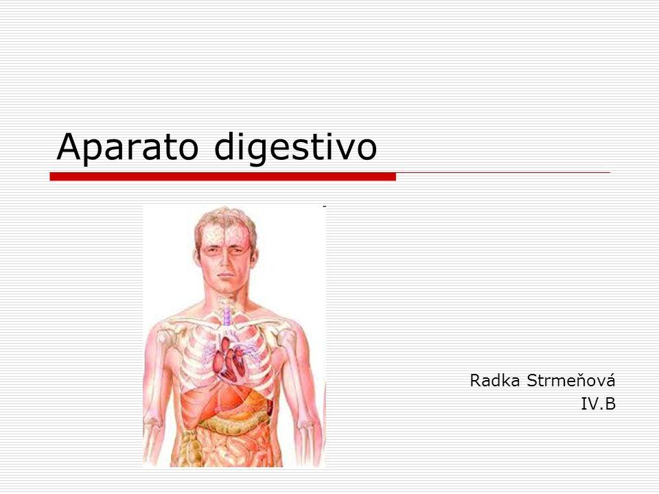Aparato digestivo Radka Strmeňová IV.B