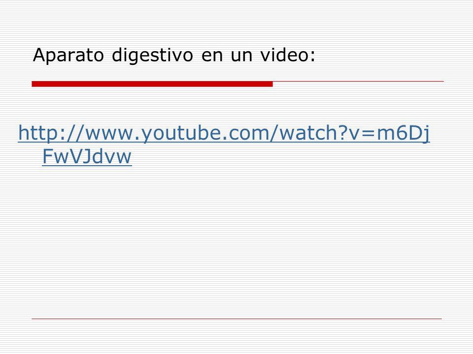 Aparato digestivo en un video: