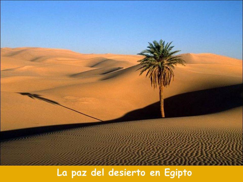 La paz del desierto en Egipto