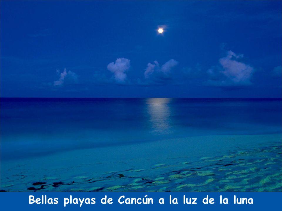 Bellas playas de Cancún a la luz de la luna