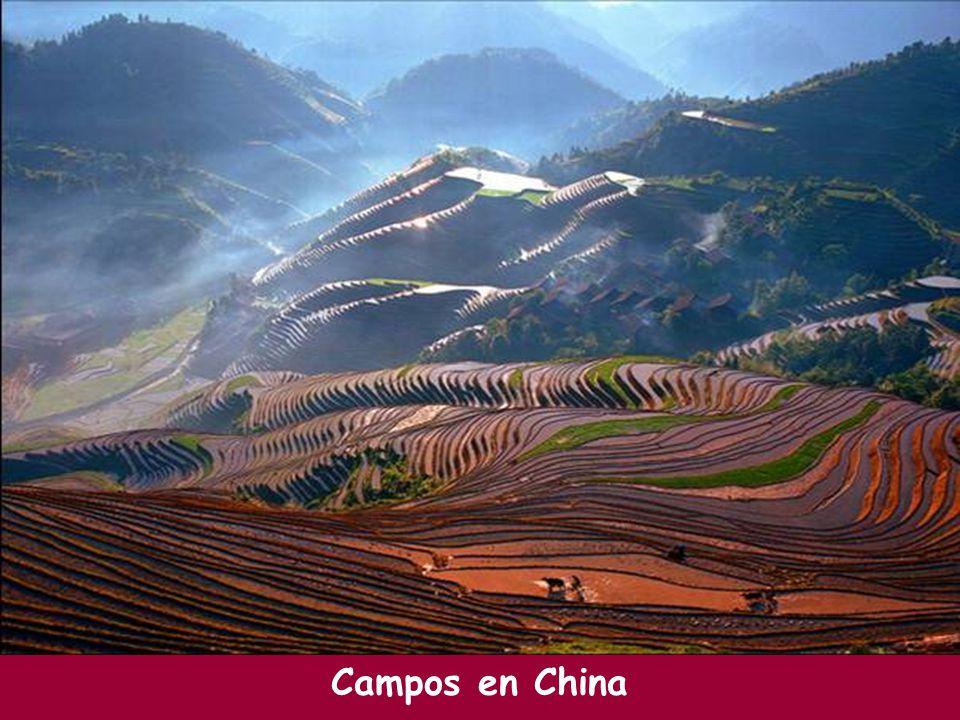 Campos en China