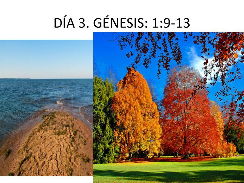 DÍA 3. GÉNESIS: 1:9-13