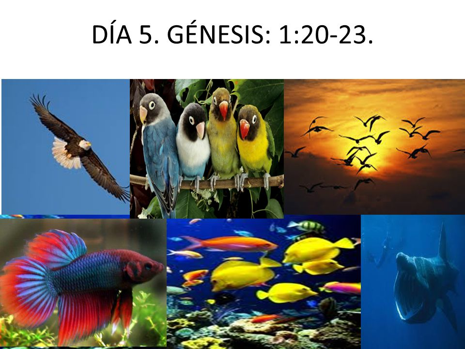 DÍA 5. GÉNESIS: 1:20-23.