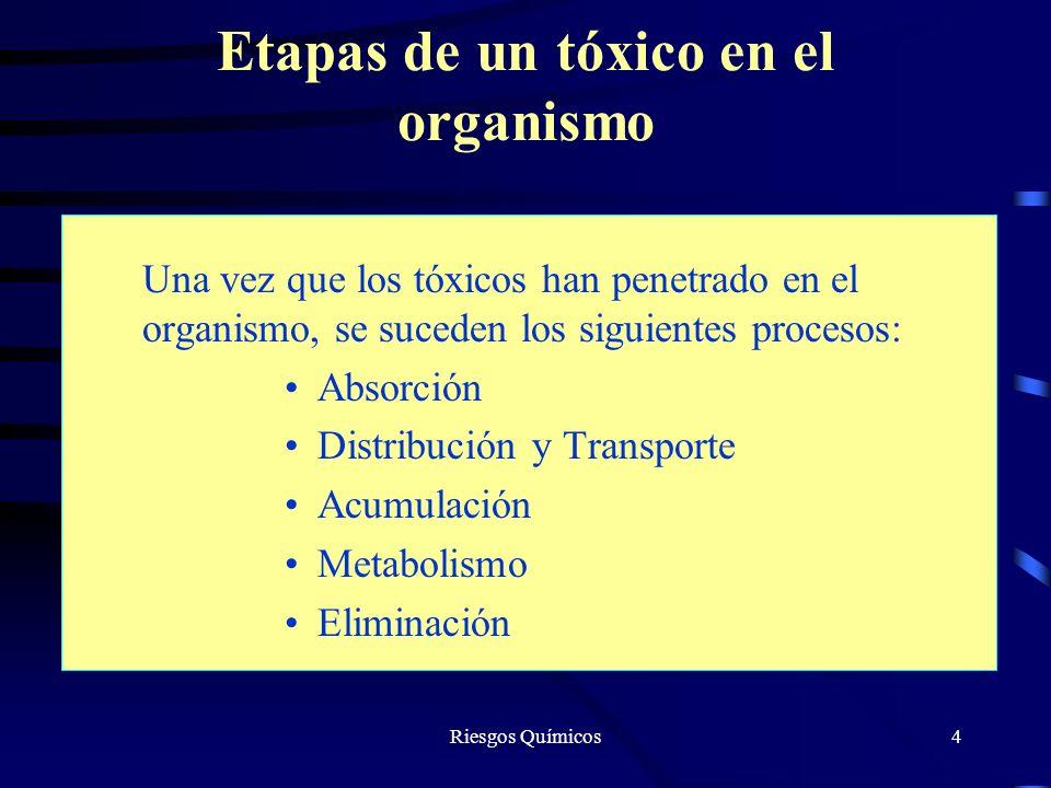 Etapas de un tóxico en el organismo