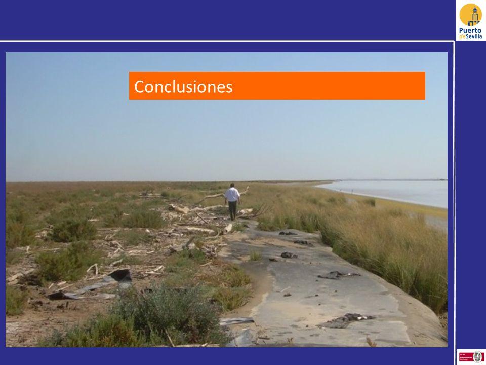 Conclusiones Altura para no condicionar el intercambio de agua entre estuario y marisma (protección del levé)