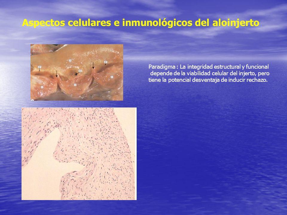 Aspectos celulares e inmunológicos del aloinjerto