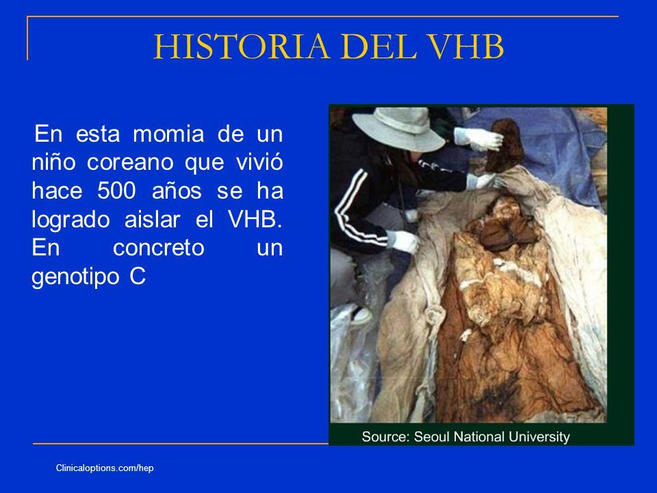 HISTORIA DEL VHB En esta momia de un niño coreano que vivió hace 500 años se ha logrado aislar el VHB. En concreto un genotipo C.