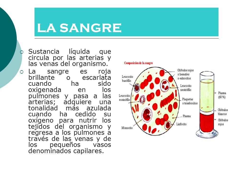 LA SANGRE Sustancia líquida que circula por las arterias y las venas del organismo.