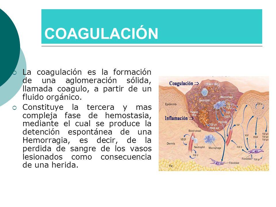 COAGULACIÓN La coagulación es la formación de una aglomeración sólida, llamada coagulo, a partir de un fluido orgánico.