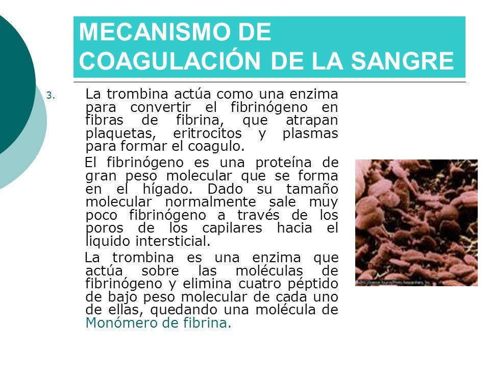 MECANISMO DE COAGULACIÓN DE LA SANGRE