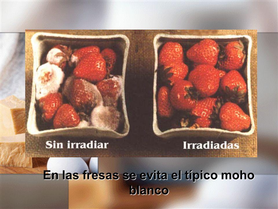 En las fresas se evita el típico moho blanco