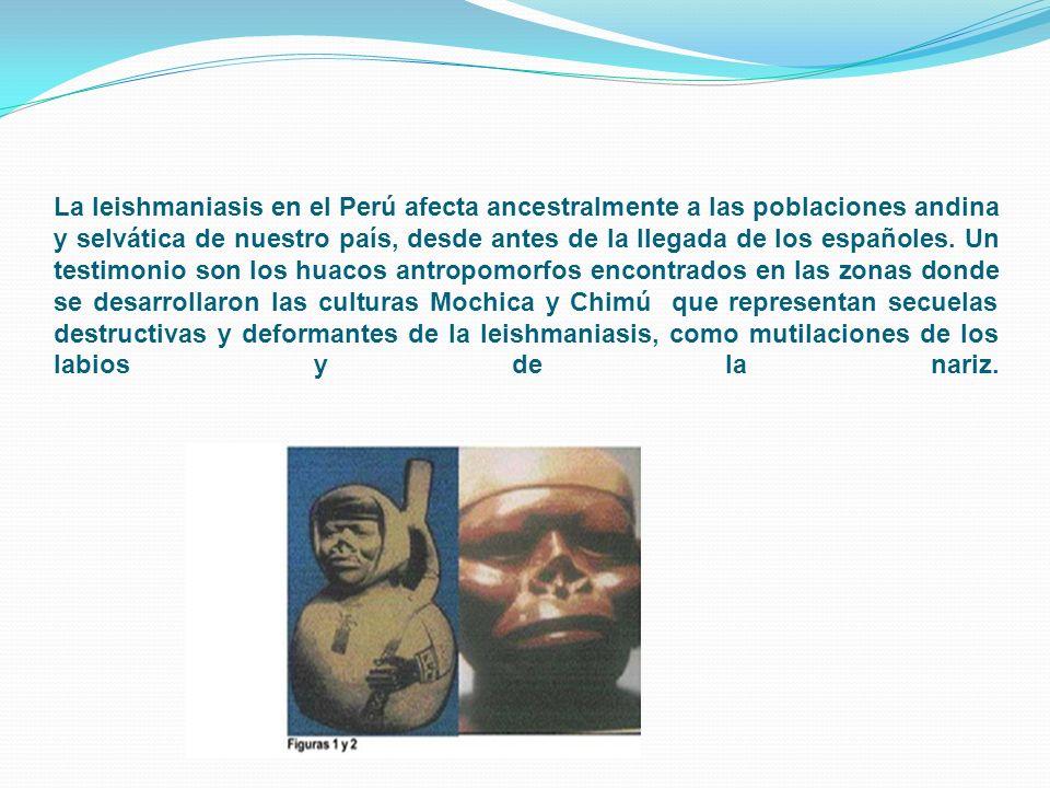 La leishmaniasis en el Perú afecta ancestralmente a las poblaciones andina y selvática de nuestro país, desde antes de la llegada de los españoles.