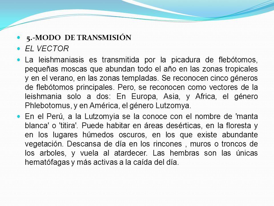 5.-MODO DE TRANSMISIÓN EL VECTOR