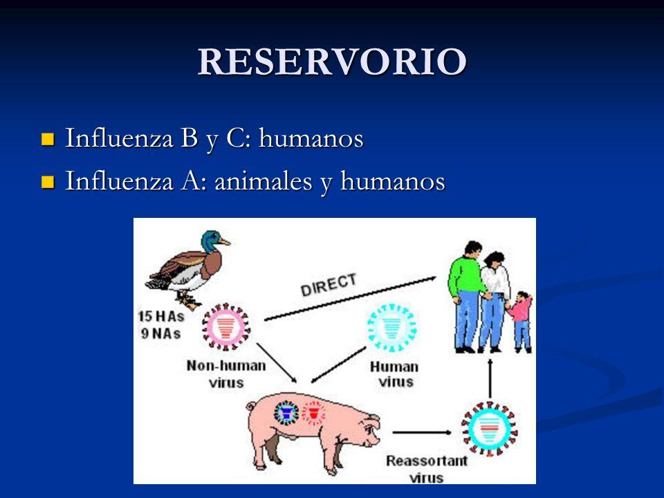 RESERVORIO Influenza B y C: humanos Influenza A: animales y humanos