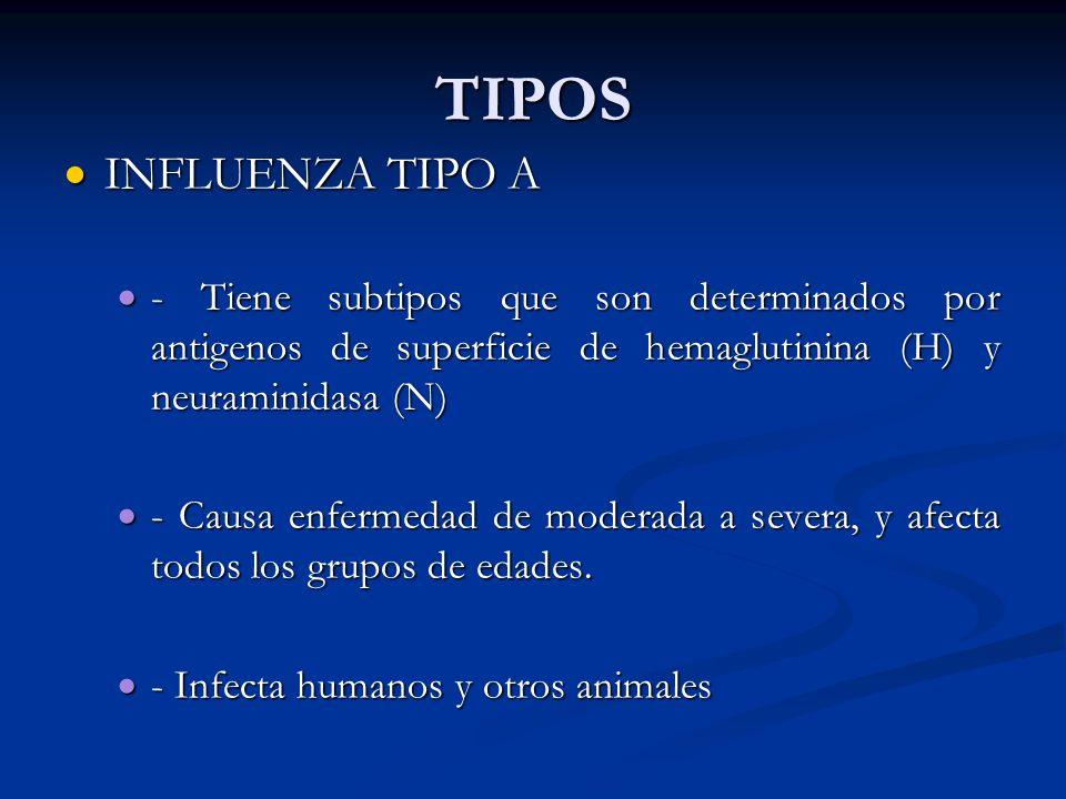 TIPOSINFLUENZA TIPO A. - Tiene subtipos que son determinados por antigenos de superficie de hemaglutinina (H) y neuraminidasa (N)