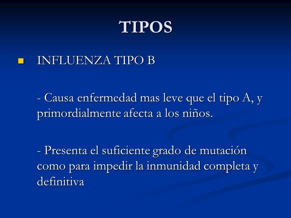 TIPOS INFLUENZA TIPO B. - Causa enfermedad mas leve que el tipo A, y primordialmente afecta a los niños.