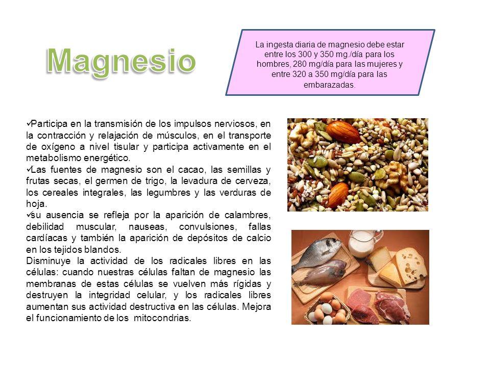 La ingesta diaria de magnesio debe estar entre los 300 y 350 mg