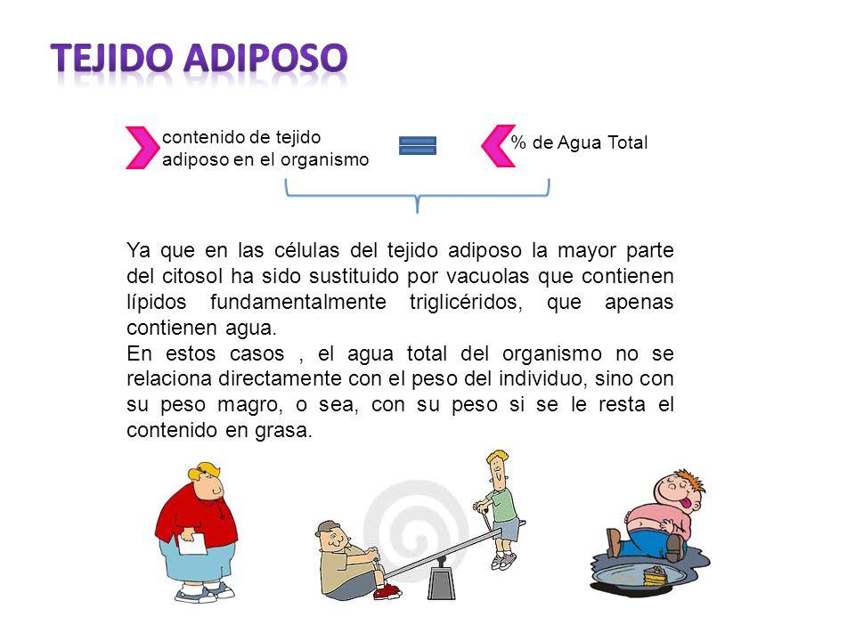 Tejido Adiposo contenido de tejido adiposo en el organismo. % de Agua Total.
