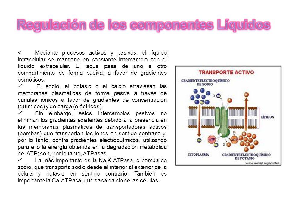 Regulación de los componentes Líquidos
