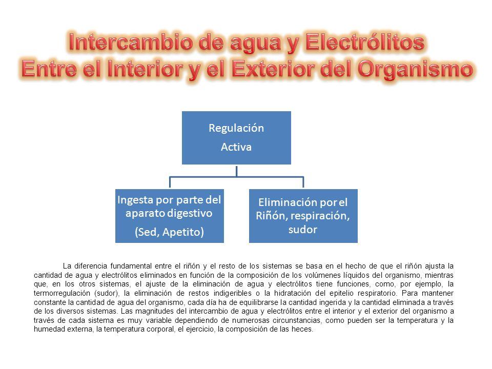 Intercambio de agua y Electrólitos