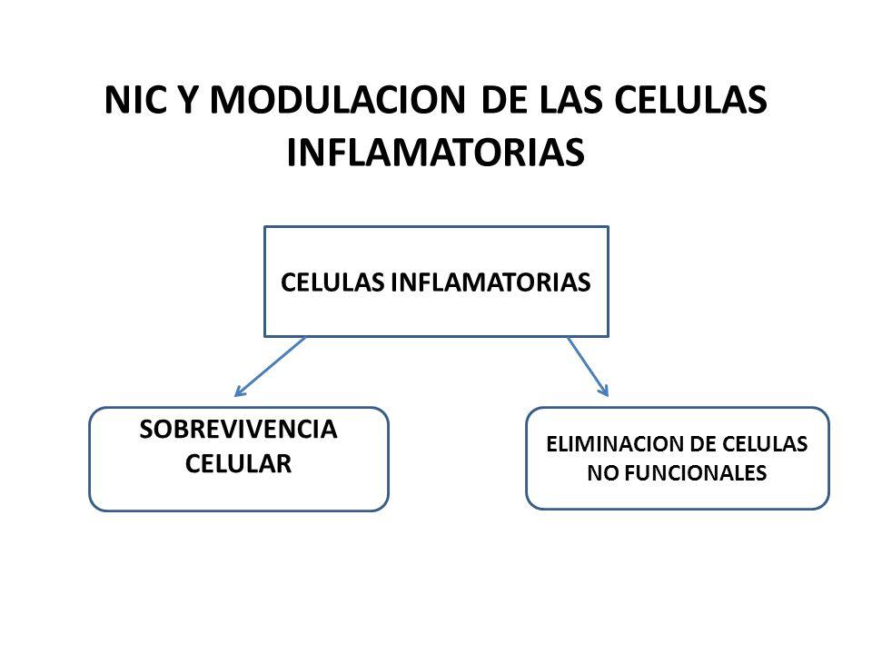 NIC Y MODULACION DE LAS CELULAS INFLAMATORIAS