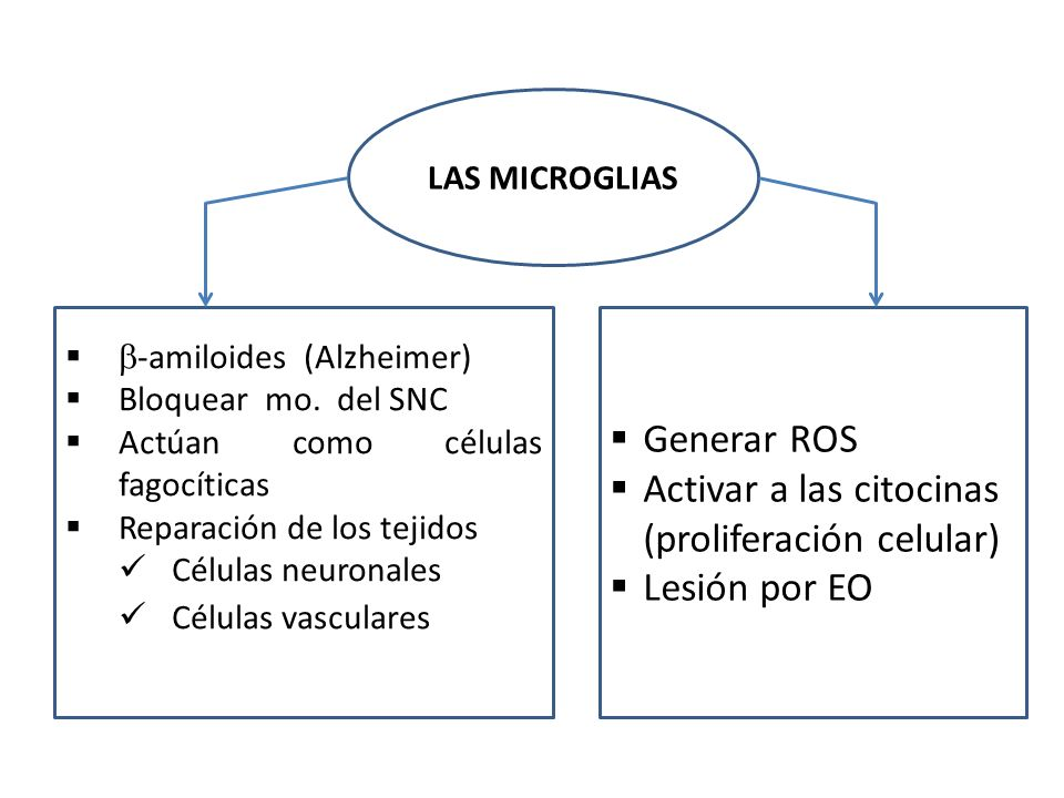 Activar a las citocinas (proliferación celular) Lesión por EO