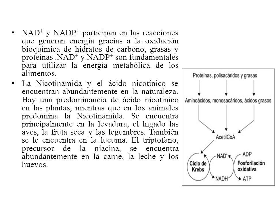 NAD+ y NADP+ participan en las reacciones que generan energía gracias a la oxidación bioquímica de hidratos de carbono, grasas y proteínas .NAD+ y NADP+ son fundamentales para utilizar la energía metabólica de los alimentos.