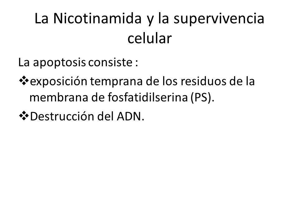 La Nicotinamida y la supervivencia celular