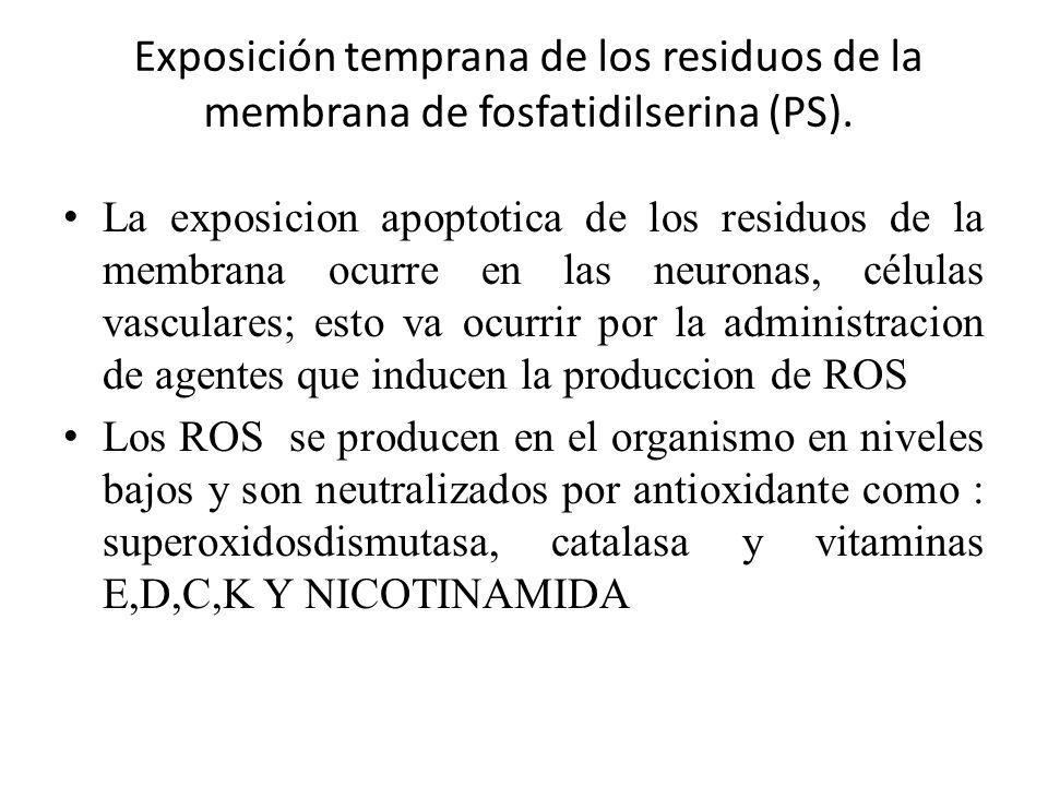 Exposición temprana de los residuos de la membrana de fosfatidilserina (PS).