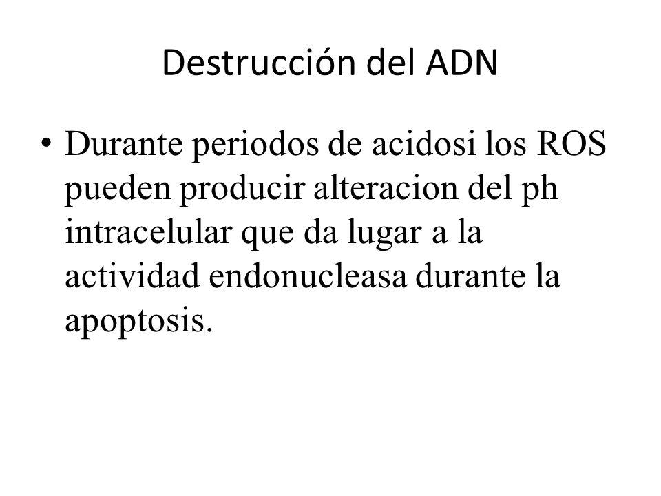 Destrucción del ADN