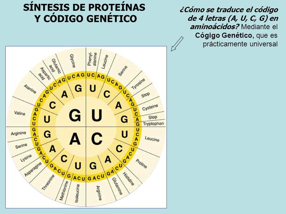 SÍNTESIS DE PROTEÍNAS Y CÓDIGO GENÉTICO
