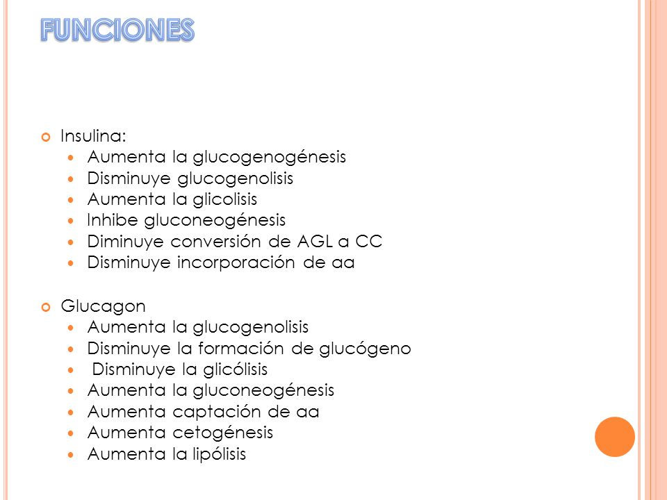FUNCIONES Insulina: Aumenta la glucogenogénesis