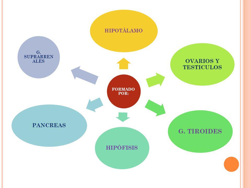 G. TIROIDES OVARIOS Y TESTICULOS HIPÒFISIS PANCREAS HIPOTÀLAMO