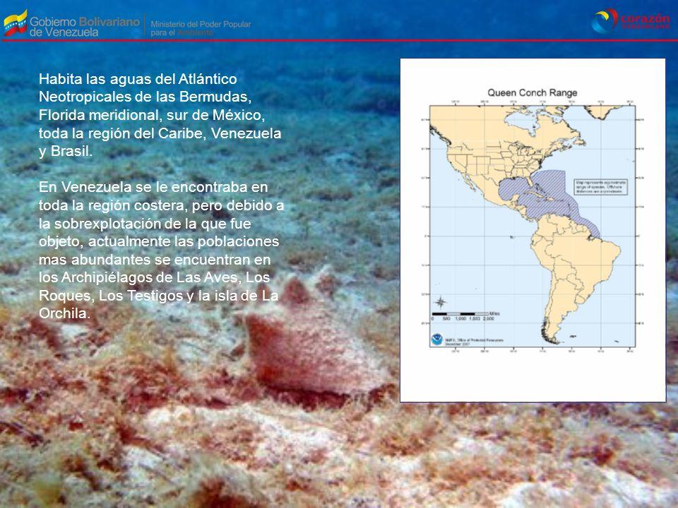 Habita las aguas del Atlántico Neotropicales de las Bermudas, Florida meridional, sur de México, toda la región del Caribe, Venezuela y Brasil.