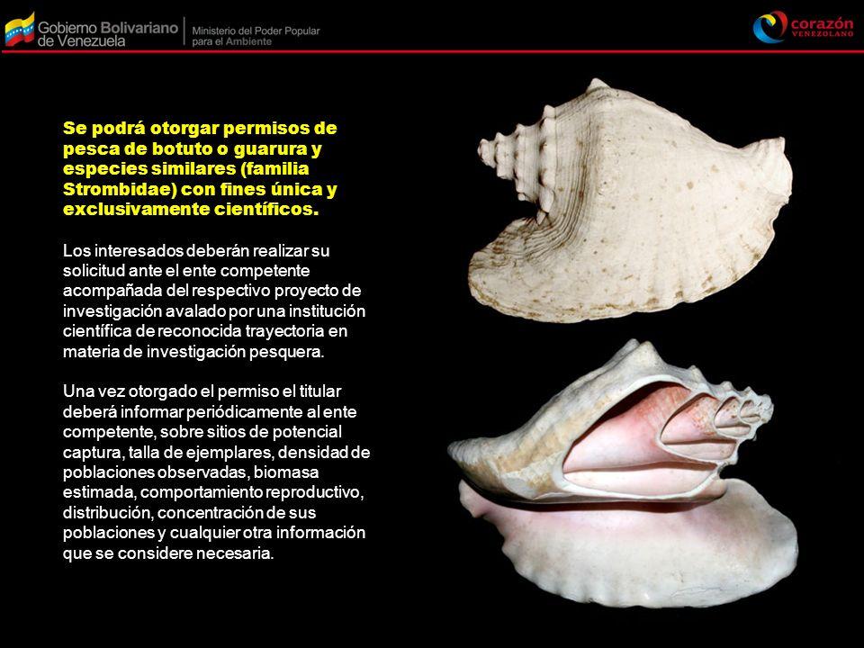 Se podrá otorgar permisos de pesca de botuto o guarura y especies similares (familia Strombidae) con fines única y exclusivamente científicos.