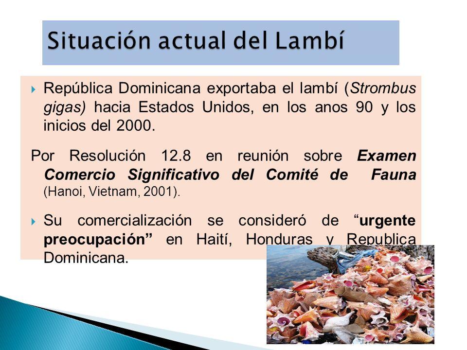 Situación actual del Lambí