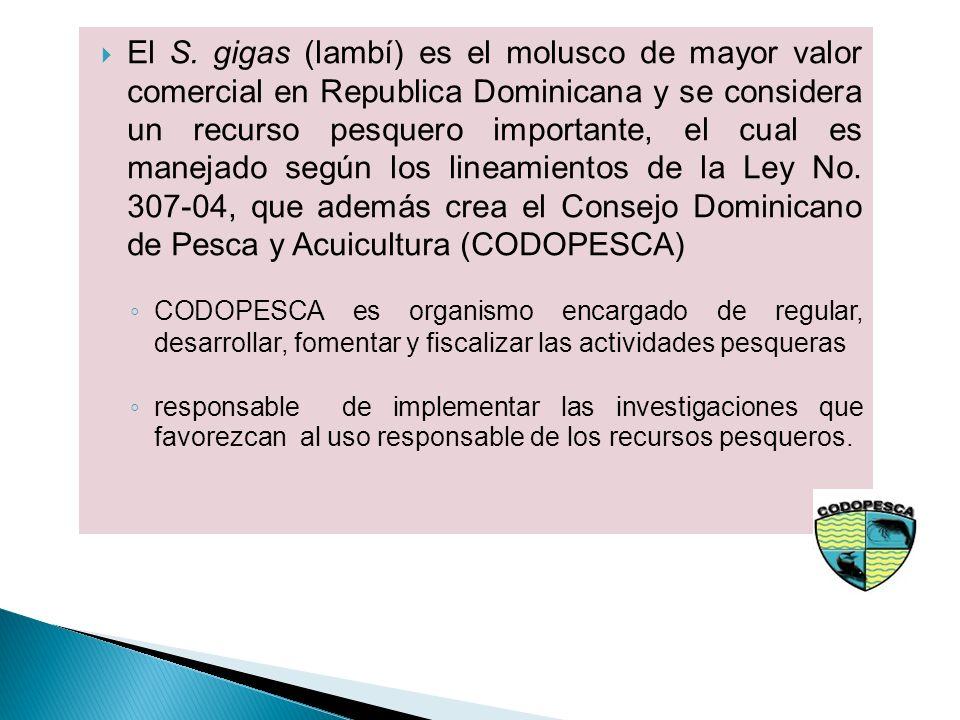 El S. gigas (lambí) es el molusco de mayor valor comercial en Republica Dominicana y se considera un recurso pesquero importante, el cual es manejado según los lineamientos de la Ley No. 307-04, que además crea el Consejo Dominicano de Pesca y Acuicultura (CODOPESCA)